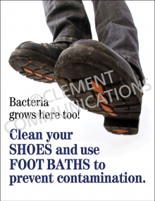 Bacteria Grows Poster